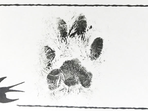 足型スタンプのイメージ