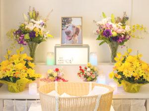 セレモニーホールでのペット葬儀のイメージ