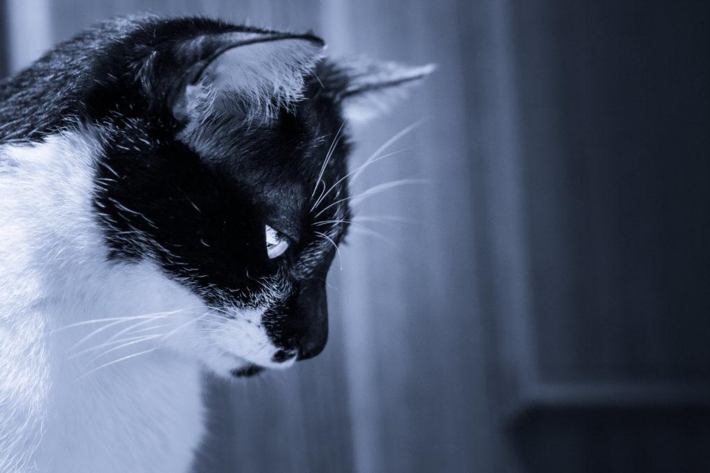 猫の火葬、葬儀