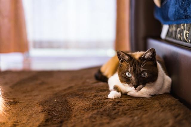 ネコの出張火葬、訪問葬儀